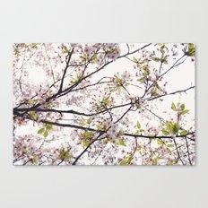 Cherry Blossoms '14 Canvas Print
