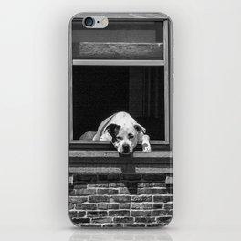 Window Watchdog iPhone Skin