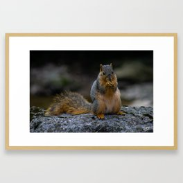 Perched Squirrel Eating a Nut Framed Art Print