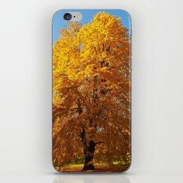 Virginia Tulip Tree iPhone Skin