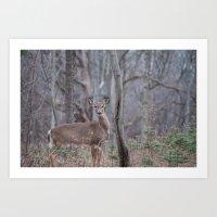Curious Deer in the Woods Art Print