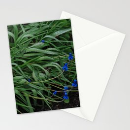 Muscari flowers after rain Stationery Cards