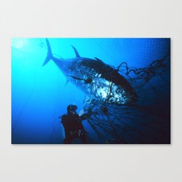Giant Bluefin Tuna Caught in a Net  Canvas Print