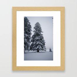 Snow pine Framed Art Print