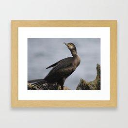 Cormorant stance Framed Art Print