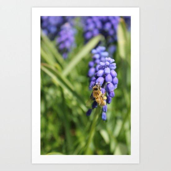 Sweet Hyacinth Art Print