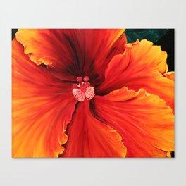 Hibiscus by Melinda Cummings Canvas Print