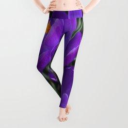 Purple Crocus Leggings