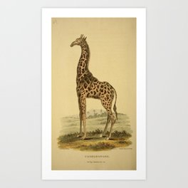 Vintage Print - Arcana or The Museum of Natural History (1811) - Cameleopard / Giraffe Art Print