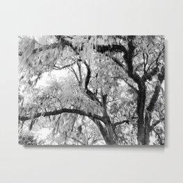 Spanish Moss in Charleston B&W Metal Print