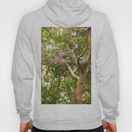 Ball in the tree Hoody
