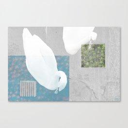 THE ENVIOUS SWAN Canvas Print