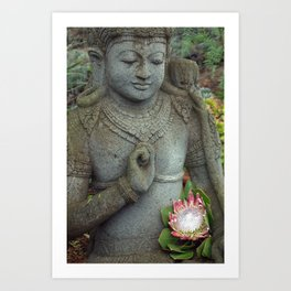 Buddha with Protea Art Print