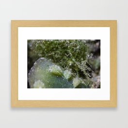 Shaun the sheep nudibranch herd Framed Art Print