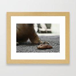 Squirrel's prey Framed Art Print