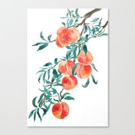 peach watercolor Canvas Print