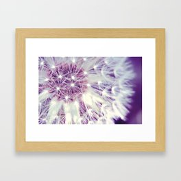 Macro pink purple white dandelion, plants, seeds, spring Framed Art Print