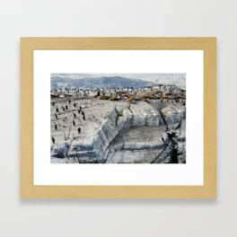 Colony of King Cormorants and Sea Lions on Ilha dos Passaros located on the Beagle Channel, Tierra D Framed Art Print