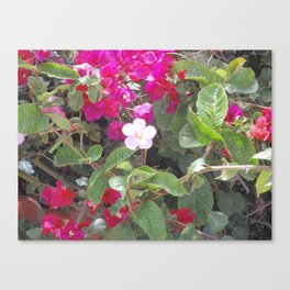 Jardín Botánico de Quito, Uno Canvas Print
