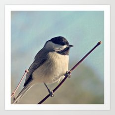 Carolina Chickadee Art Print