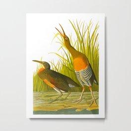 Salt Water Marsh Hen Metal Print