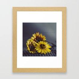 Suns Framed Art Print