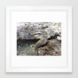 Duck duck gray duck Framed Art Print