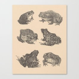 Naturalist Frogs Canvas Print