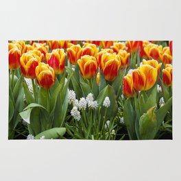 Red and Yellow Stripes Tulips with White Blossoms underneath in Amsterdam, Netherlands Rug