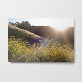 Up in the Berkeley Hills... Metal Print