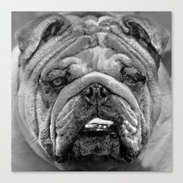 Bulldog Black and White Canvas Print