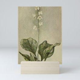 Vintage Botanical Print - Shinleaf Mini Art Print