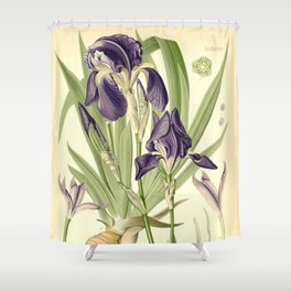 Purple Iris Shower Curtain