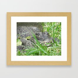 Caiman After my Heart Framed Art Print