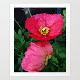 Poppies Three Art Print