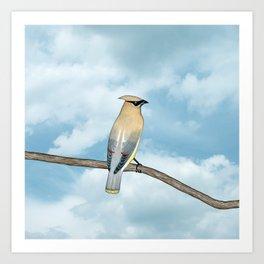 cedar waxwing and blue sky Art Print