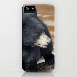 Black Bear (Ursus americans) near water iPhone Case
