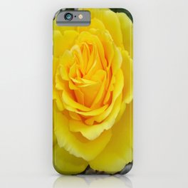 Head On View Of A Yellow Rose With Garden Background iPhone Case