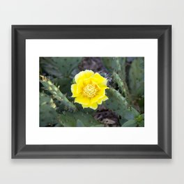 Yellow Cactus Flower Framed Art Print