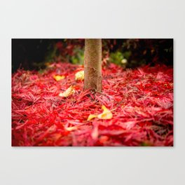 carpeted in crimson Canvas Print