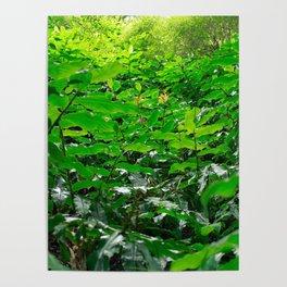 Green foliage Poster