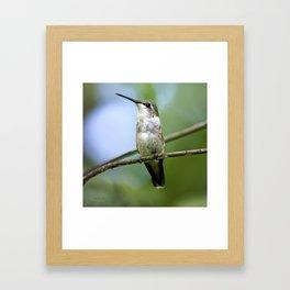 Female Hummingbird Framed Art Print