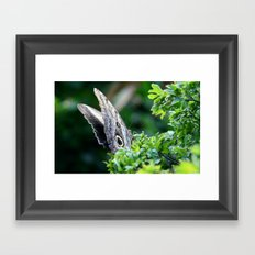 Butterfly Distracted Framed Art Print