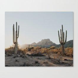 Two Saguaros Canvas Print