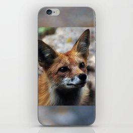 Gentle Fox iPhone Skin
