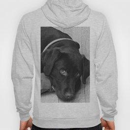Puppy Portrait Textured Hoody