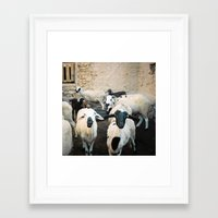 morrocan Framed Art Prints featuring Sheep in Morrocan desert (color) by Hanke Arkenbout