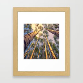 Aspen Trees Against Sky Framed Art Print