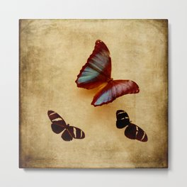 Vintage Butterfly Display Brown and Blue Metal Print
