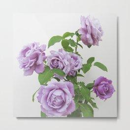winter rose . image Metal Print
